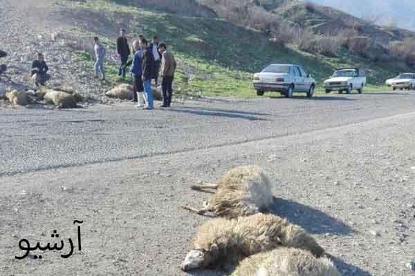 قتل یک چوپان