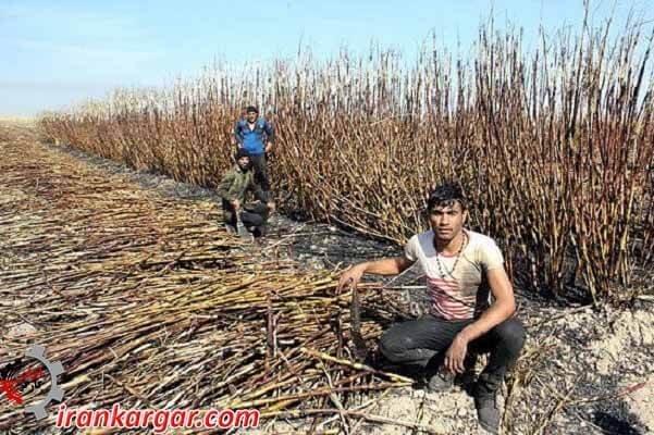 کارگران فصلی