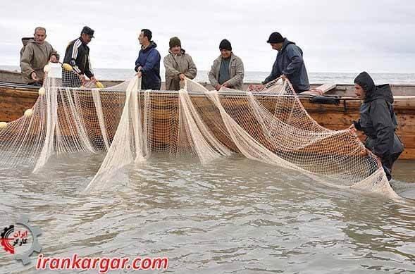 صیاد ماهی گلستان