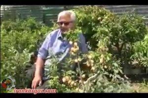 باغ جادو در همدان با درختهای خارقالعاده و یاد آور سرزمین عجایب
