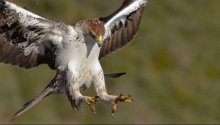 صحنههای بسیار زیبا و جذاب برای شکارچی و بسیار دردناک و میخکوب کننده برای شکار