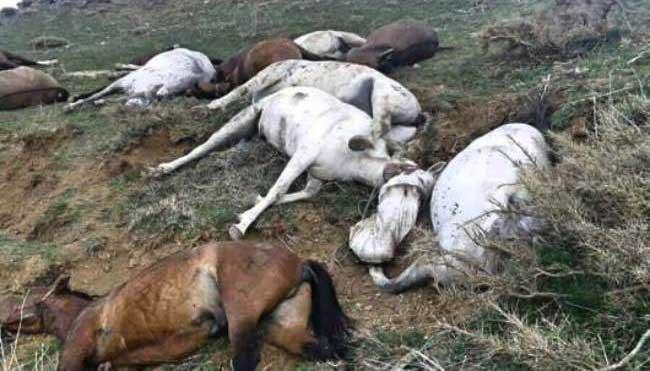 کشتار بیرحمانه ٢٨ راس اسب کاسبکاران