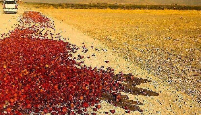 گوجه کار